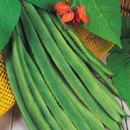 Runner Bean Enorma 1 kg - Bulk Discounts Available